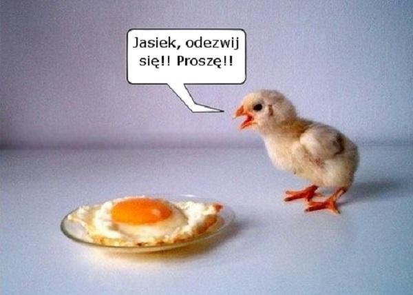 o_jajkach02